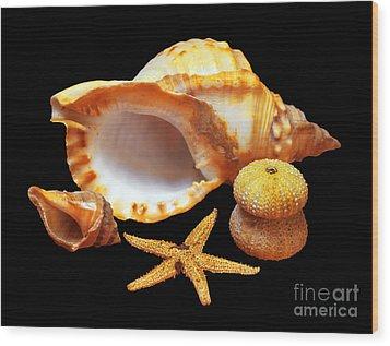 Whelk Wood Print by Carlos Caetano