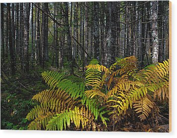 Where The Ferns Grow Wood Print by Ronald Lutz