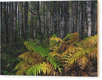 Where The Ferns Grow Wood Print