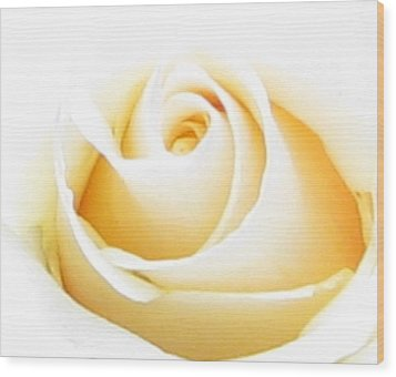 Whipped Butter Cream Rose Micros Wood Print