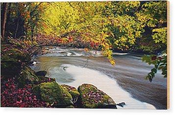 Whirlpool Canopy Wood Print by Kim Shatwell-Irishphotographer