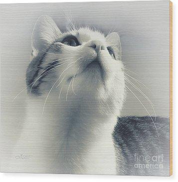 Whiskers Wood Print by Jutta Maria Pusl