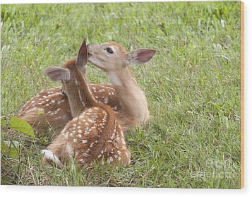 Wood Print featuring the photograph Whispering Fawns by Jeannette Hunt