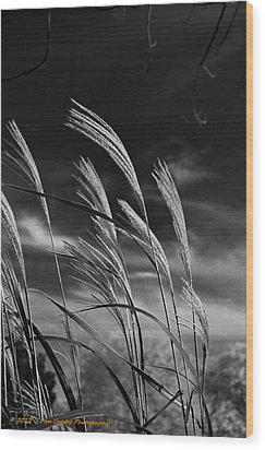 Whispering Wind Wood Print by Dan Crosby