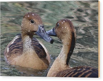 Whistling Ducks Wood Print by Paulette Thomas