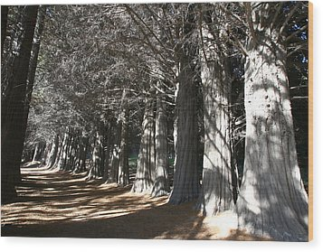 White Alley Wood Print