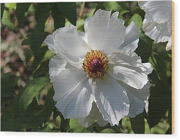 Wood Print featuring the photograph White Alluring by Bob Whitt
