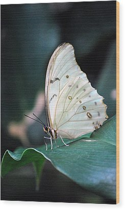 Wood Print featuring the photograph White And Beautiful by Amee Cave