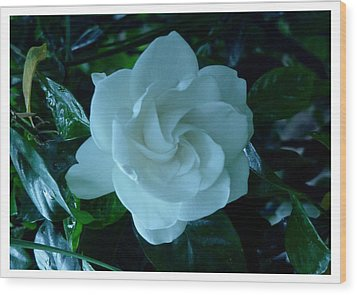 Wood Print featuring the photograph White And Fragrant by Frank Wickham