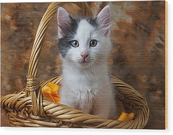 White And Gray Kitty Wood Print by Garry Gay