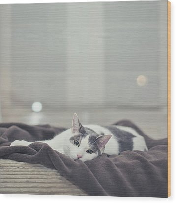 White And Grey Cat Lying On Brown Blanket Wood Print by Cindy Prins