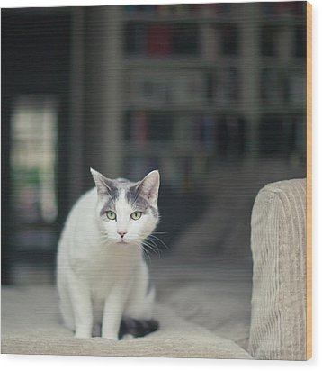 White And Grey Cat On Couch Looking At Birds Wood Print by Cindy Prins