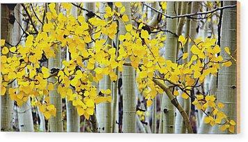 White Aspen Golden Leaves Wood Print by Jeff Lowe