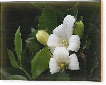 White Beauty Wood Print by Elisabeth Dubois
