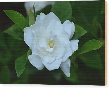 Wood Print featuring the photograph White Beauty by Rima Biswas