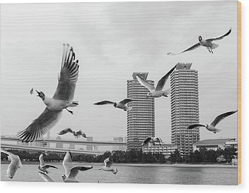 White Birds In Flight Wood Print by BZause a picture is worth a thousand words.