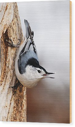 White-breasted Nuthatch 3 Wood Print by Larry Ricker