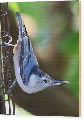 Wood Print featuring the photograph White-breasted Nuthatch by Laurel Talabere