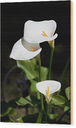 White Calla Lilies Wood Print by Tobias Titz
