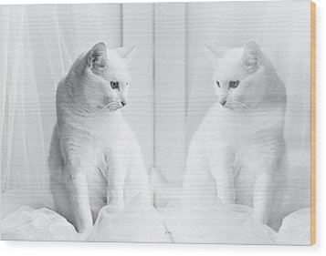 White Cat Reflected In Window Wood Print by Vilhjalmur Ingi Vilhjalmsson