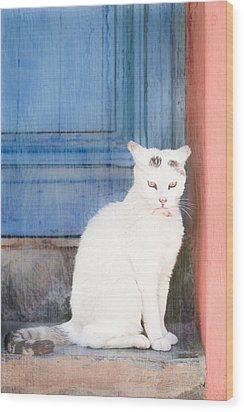 White Cat Wood Print by Tom Gowanlock