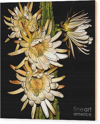 White Cereus Flowers - Digital Art  Wood Print by Dolores Root