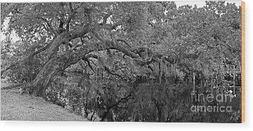 White City Oak Pano Wood Print by Larry Nieland