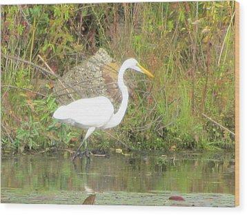 White Crane - Wildlife Wood Print by Susan Carella