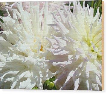 White Dahlia Flowers Art Prints Floral Wood Print by Baslee Troutman