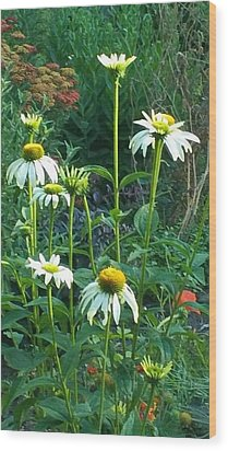 White Daisies And Garden Flowers Wood Print by Thelma Harcum