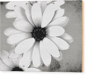 Wood Print featuring the photograph White Daisy by Tammy Espino