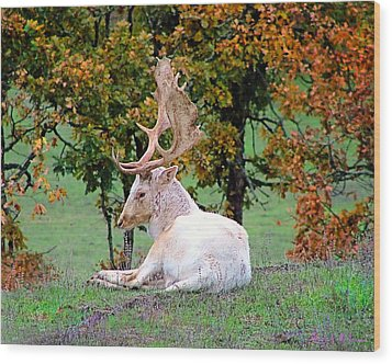 Wood Print featuring the photograph White Deer by Wendy McKennon