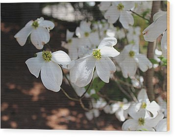 Wood Print featuring the photograph White Dogwood by Bob Whitt
