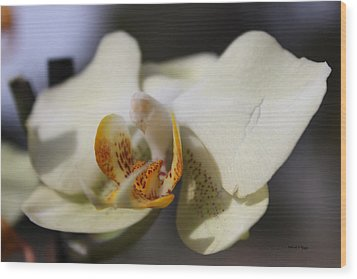 White Dove Orchid Wood Print by Deborah Hughes