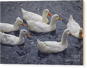 White Ducks Wood Print by Elena Elisseeva