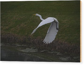 White Egret Wood Print by Randy J Heath