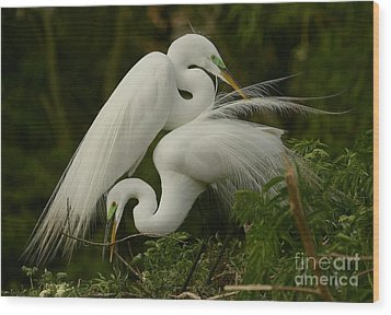 Wood Print featuring the photograph White Egrets Working Together by Myrna Bradshaw