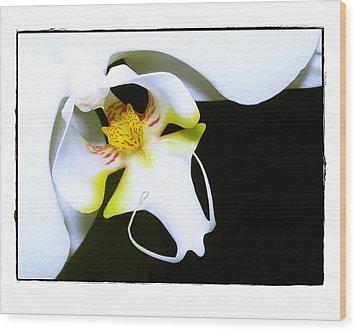White Elegance Wood Print by Judi Bagwell
