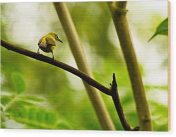Wood Print featuring the photograph White-eye by Justin Albrecht