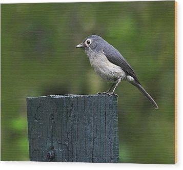 White-eyed Slaty Flycatcher Wood Print by Tony Beck
