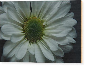 White Flower Wood Print by Ron Smith