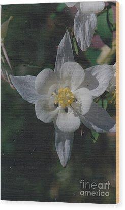 White Flower Splendor Wood Print