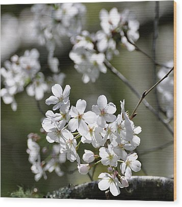 Wood Print featuring the photograph White Flowering Plum by Helen Haw