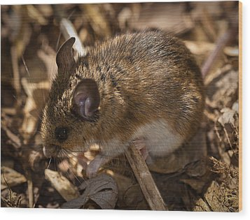 White-footed Mouse Wood Print