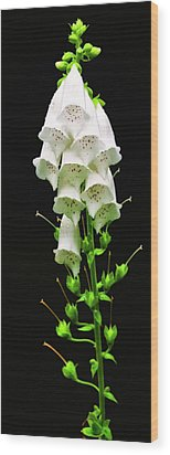 Wood Print featuring the photograph White Foxglove by Albert Seger