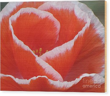 Wood Print featuring the photograph White Fringed Red Poppy by Michele Penner