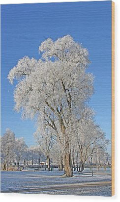 White Frost Tree Wood Print by Ralf Kaiser