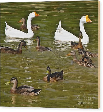 White Geese And Ducks Wood Print by Harry Strharsky