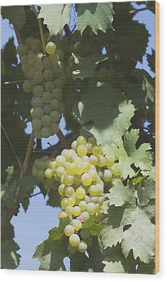 White Grapes On The Vine Wood Print by Michael Interisano