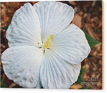 White Hibiscus Bloom Wood Print by Eva Thomas